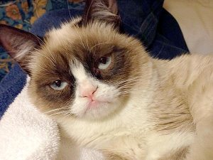 Grumpy cat has landed a movie deal.